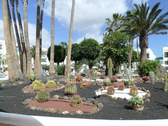 Oasis Lanz Beach Mate: Pretty gardens around the pool.