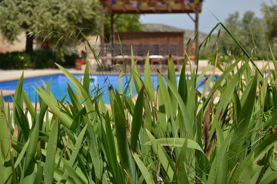 Yoga Holidays Spain - Casa de Carrasco : The pool and outdoor kitchen