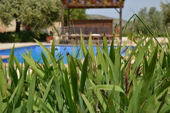 Yoga Holidays Spain - Casa de Carrasco: The pool and outdoor kitchen