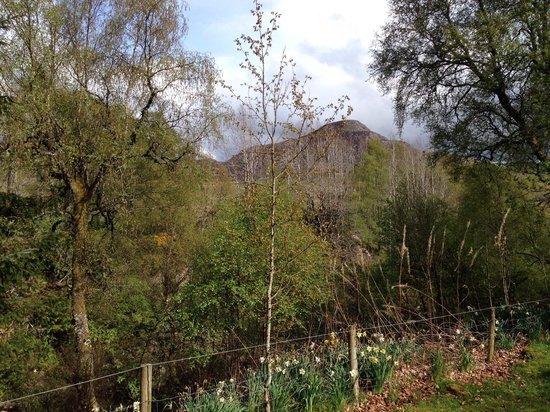 Wildside Highland Lodges : View from Rowan
