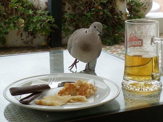Oasis Lanz Beach Mate: Cheeky dove eyeing up my lunch!