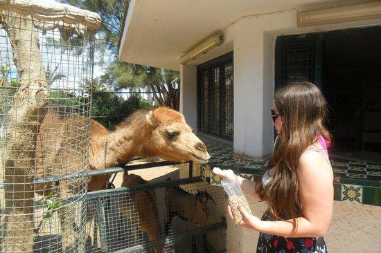 Marhaba Palace Hotel : local zoo
