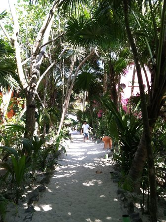 Posada Ecologica Dos Ceibas: Path from beach to parking lot