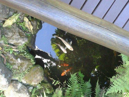 Hotel La Foret: naturaleza en el hotel