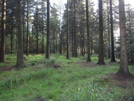 Center Parcs Longleat Forest: The view from our villa - 407