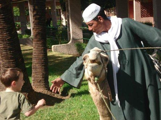 Maritim Jolie Ville Kings Island Luxor: Friendly camel Cleopatra