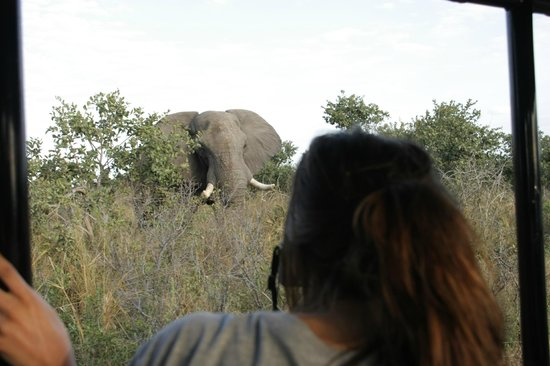 Savute Reserve: Huyendo de los elefantes