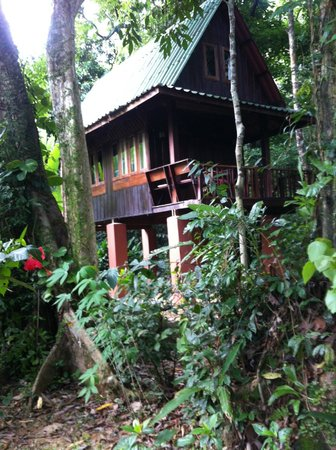 Our Jungle House: onze bungalow