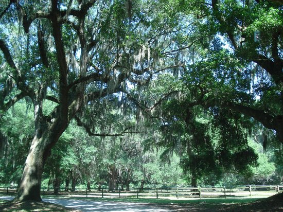 Inn at Middleton Place: Mighty Trees and Spanish Moss
