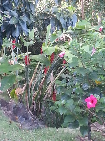 Gite Macanao : Jardin côté chambre