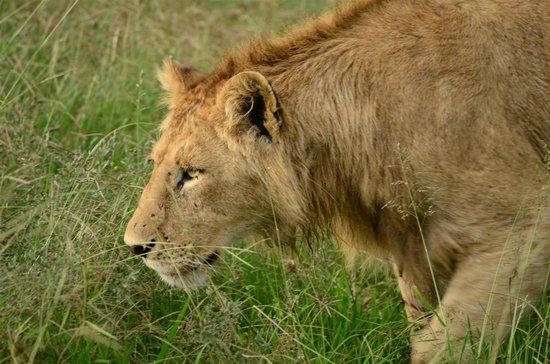 Ngorongoro Sopa Lodge: Wer früh aufsteht, darf mich ganz nah sehen