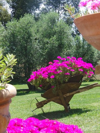 B&B Locanda degli Etruschi: Parco Giardino