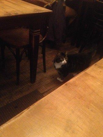 La Festa: Really cute cat, but in a restaurant?