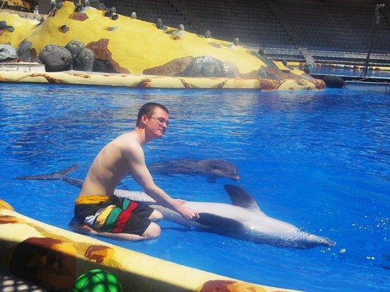 Aqualand Costa Adeje : dolphin encounter