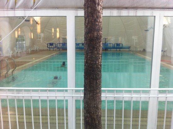 Camping Sagone: piscine chauffee