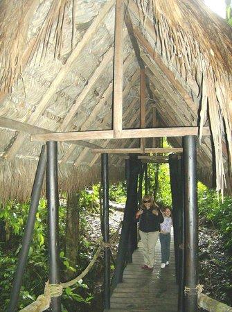 Cotococha Amazon Lodge: Este puentecito me encantó!