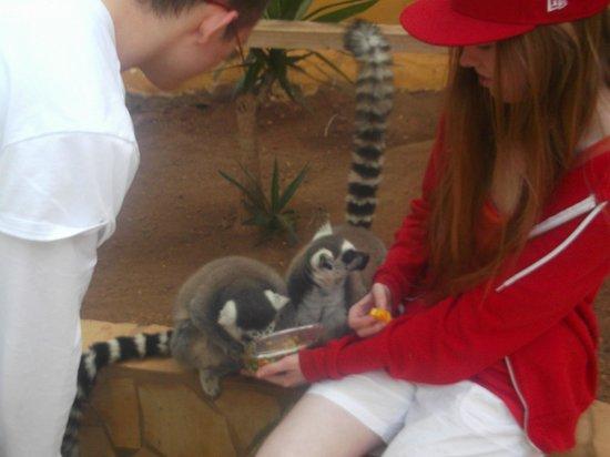 Monkey Park : limas
