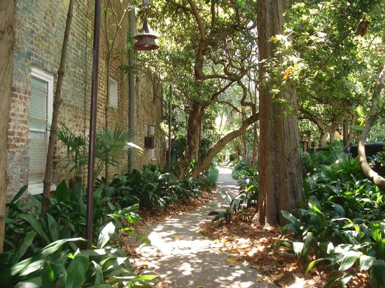 Unitarian Church in Charleston: Beautiful Alley Leading to Graveyard