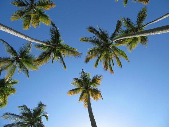 Grand Paradise Samana: My palms