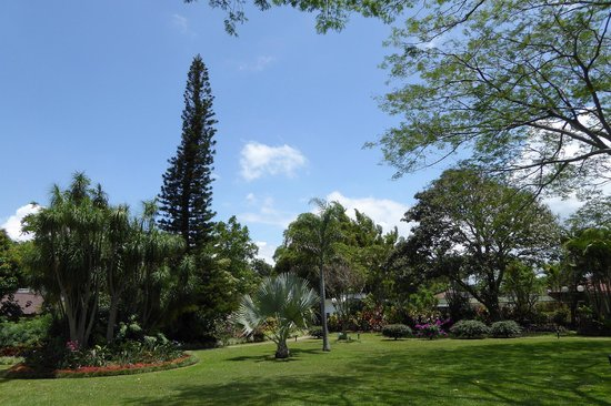 Hotel Bougainvillea: Part of the hotel's extensive gardens