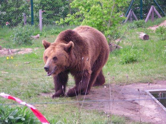 Greenline Hotel Hellfeld: das Bärenschutzzentrum