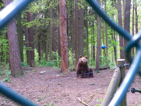Greenline Hotel Hellfeld: bei den Bären