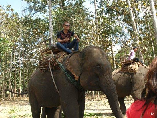 Baan Kaew Guesthouse: Mahut - einer der Elephantenführer mit seinem Elephant