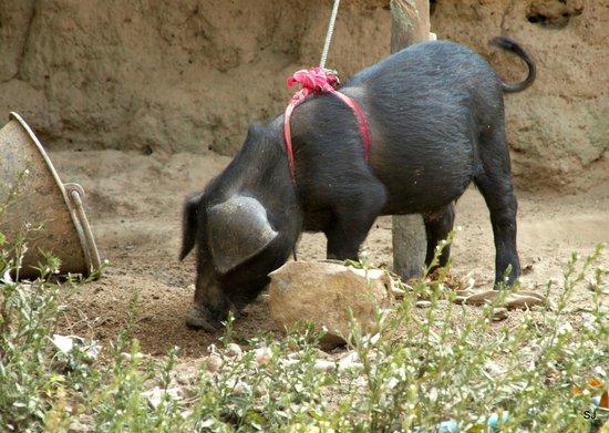 Baan Kaew Guesthouse: Auf der bebuchten Reise: im Dorf der Karen