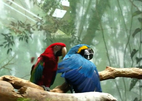 Central Park Zoo: tropical paradise