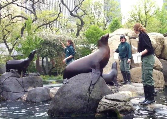 Central Park Zoo: sea lions show