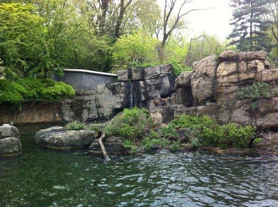 Central Park Zoo: snow monkeys