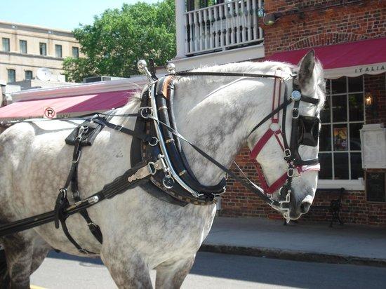 Palmetto Carriage Works: Beautiful Percheron