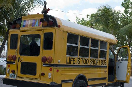 "Ibis Bay Beach Resort: The ""Life is Too Short"" shuttle bus"