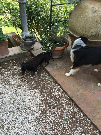 Relais Poggio Ai Santi: Petunia & Iris - two of the three dogs