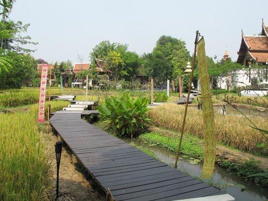 The Dhara Dhevi Chiang Mai: Campos de Arroz