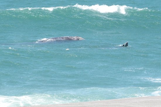 Seacliff Motel on the Bluff: From our room, a mother whale and her calf