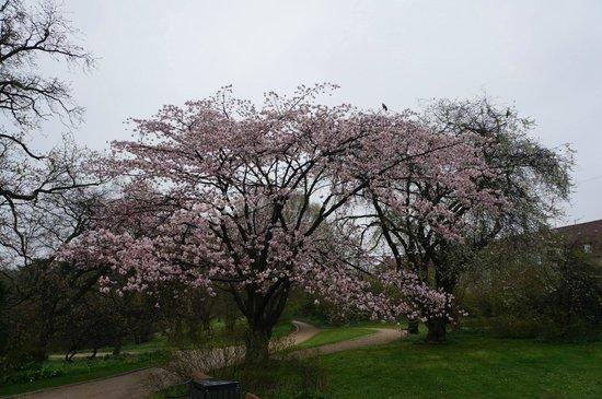 Botanical Gardens (Botanisk Have) : Beautiful.