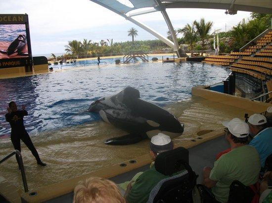Loro Parque : Orca