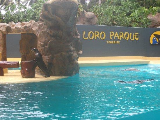 Loro Parque : Sea Lions