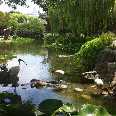 Chinese Garden of Friendship: Three white ibises
