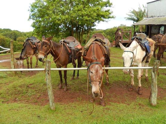 Molokai Mule Ride : Pre-trip snack