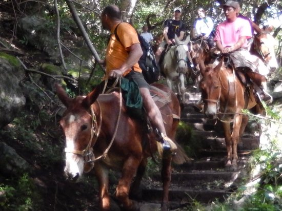 Molokai Mule Ride : Riders following behind position # 2