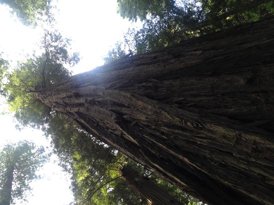 Avenue of the Giants : BFT