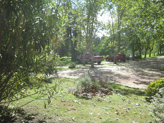Estancia Don Joaquin: Esta foto marca el camino hacia el tambo, es un típico paisaje del lugar, muchos árboles...