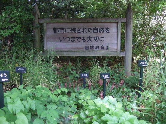 Institute of Nature Study: ほとんどの草木に名札板がついています