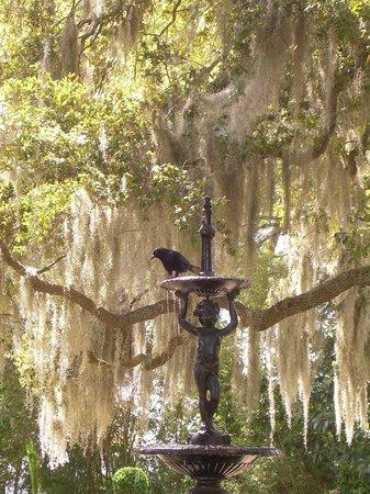 Janet's Walking History Tour: Bird enjoying fountain