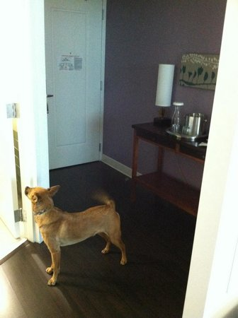Hotel Indigo Asheville Downtown: Pet friendly!