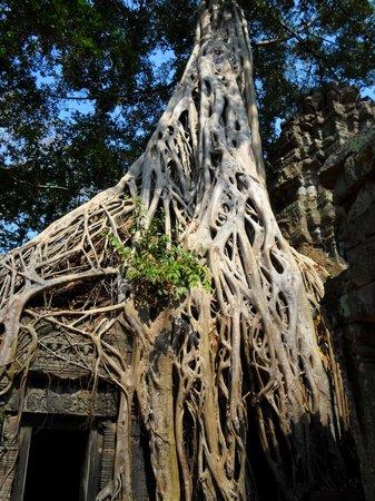 Ta Prohm: Roots