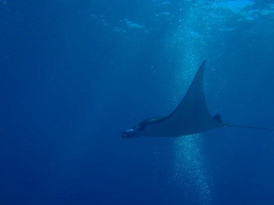 Adventure Divers Bali: Manta Point