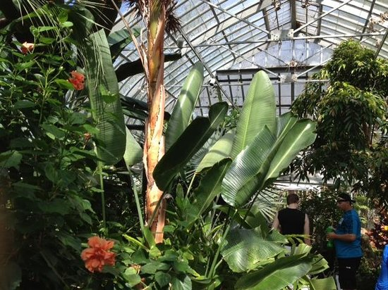 Highland Botanical Park and Lamberton Conservatory: Lamberton Conservatory - trail through plants
